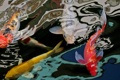 Картинка природа, fish, carps