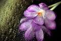 Картинка цветок, капли, макро