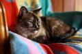 Картинка кошка, уют, дом