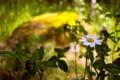 Картинка природа, ромашка, лето