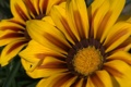 Картинка лепестки, пятна, жёлтые, расцветка