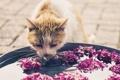 Картинка кошка, вода, фон