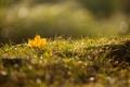 Картинка осень, трава, блики, роса, лист, макро