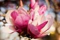 Картинка бутоны, розовые, цветы