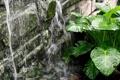 Картинка цветок, вода, природа, чистота, источник
