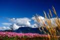 Картинка облака, макро, цветы, горы, природа, колоски, розовые