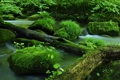 Картинка мох, река, бревна, камни