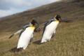 Картинка природа, пингвины, север