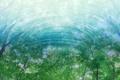 Картинка отражение, свет, вода, листва, Деревья