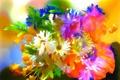 Картинка линии, цветы, абстракция, краски, лепестки