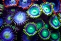 Картинка причудливость, разноцветно, подводные растения