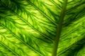 Картинка макро, свет, лист, зеленый, фон, текстура, прожилки