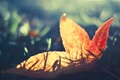 Картинка осень, трава, макро, лист
