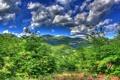 Картинка лес, небо, облака, деревья, горы, природа.