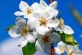 Картинка небо, веточка, весна, яблоня