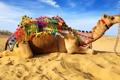 Картинка песок, облака, верблюд