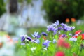 Картинка цветы, клумба, сиреневые, боке