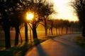 Картинка дорога, солнце, деревья, закат, поля, вечер, поворот
