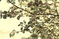 Картинка листья, макро, свет, ветки, природа, листва, размытость