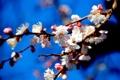 Картинка небо, цветы, веточка, Весна