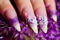 Картинка Маникюр, ногти, цветы