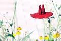 Картинка природа, мак, цветы
