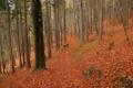 Картинка лес, осень, прогулка