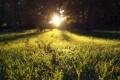 Картинка зелень, трава, листья, солнце, лучи, свет, закат