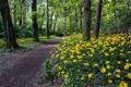 Картинка дорога, лес, цветы, природа