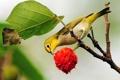 Картинка цветок, лист, птица, ветка