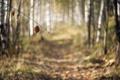Картинка дорога, лес, природа, лист
