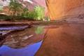 Картинка вода, деревья, река, скалы, каньон, ущелье