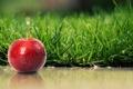 Картинка Apple, red, Grass, Shadow