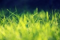 Картинка трава, листья, макро, свет, deviantart, Playing with Sunlight, salmanarif