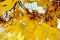 Картинка Лист, Осень, Обои Осень, hddraw