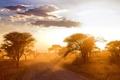 Картинка пейзаж, Африка, дорога, утро