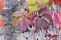 Картинка осень, природа, листва