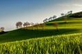 Картинка поле, лето, утро
