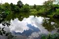 Картинка пруд, деревья, Таиланд, отражение, листва, провинция Сонгкхла