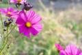 Картинка лето, цветы, природа, blur