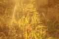Картинка трава, свет, блики