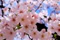 Картинка природа, весна, цветение, полное, буйное