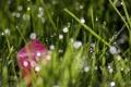 Картинка трава, макро, лист