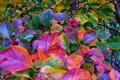 Картинка осень, лес, листья, деревья, плоды