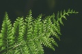 Картинка листья, зеленое, растение