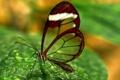 Картинка насекомые, макро, разное