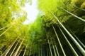 Картинка природа, небо, зелено, деревья