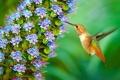 Картинка цветок, птица, колибри