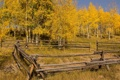 Картинка осень, деревья, пейзаж, забор