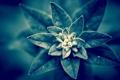 Картинка листья, спокойствие, растение, ворсинки